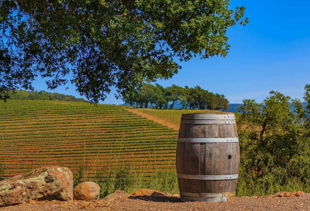 Sonoma Vineyard with a large wine cask in the foreground