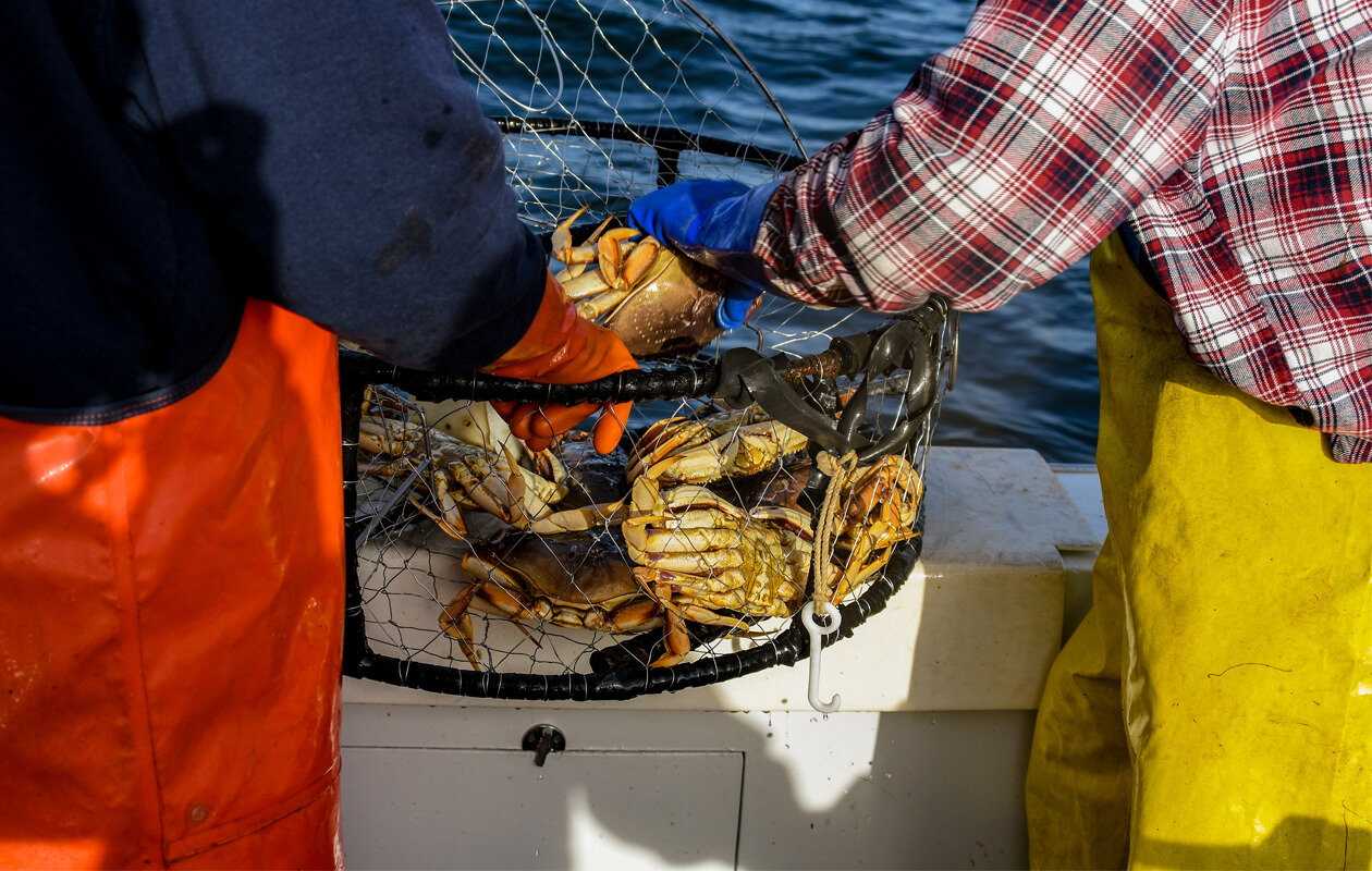 Dungeness crabbing in Sonoma and Jenner
